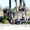 The_Puppies-DSD_2289_1024x685