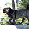 The_Puppies-DSD_2288_1024x685