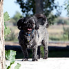 The_Puppies-DSD_2286_1024x685