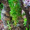 SRf2006_2729_Tree