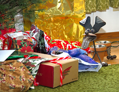 2016 - Gifts under the tree