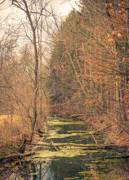 Creek through 5 Trees