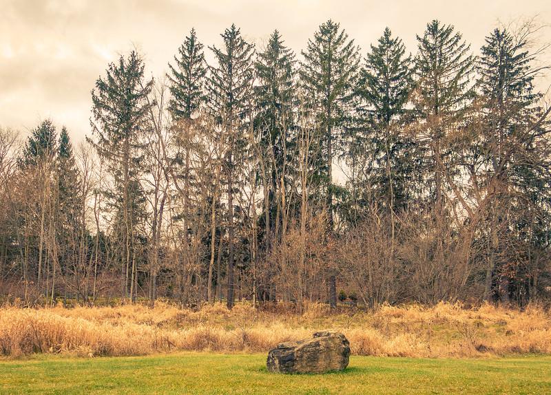 5 Trees scenery