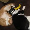 Sibling kitties!