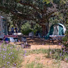 Campsite #37, features full shade and your own private wildflower meadow.