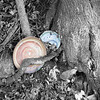 colored pottery in B&W tree #1