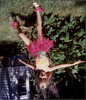 1982 Rescanned by Steve_00004A