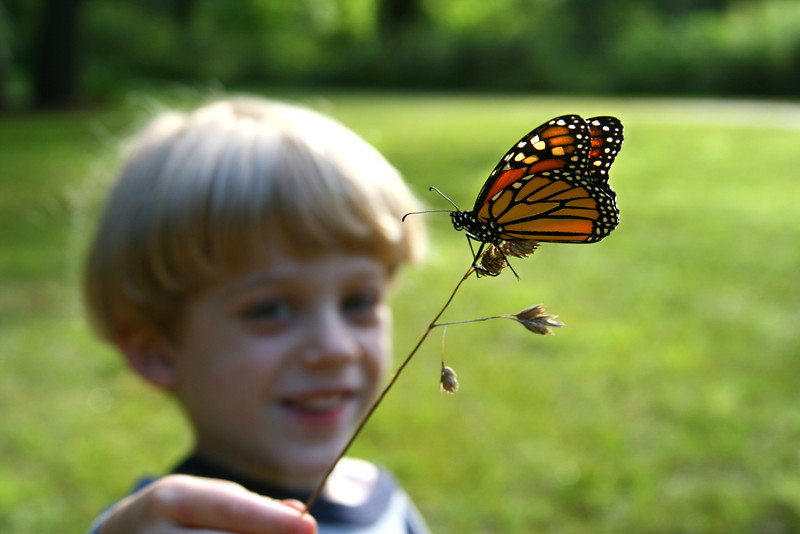 Young boy holds a Monarch Butterfly on a stick.