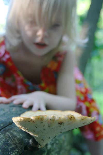 Girl investigates a huge mushroom on a log.