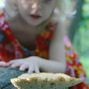 Girl investigates a huge mushroom on a log.