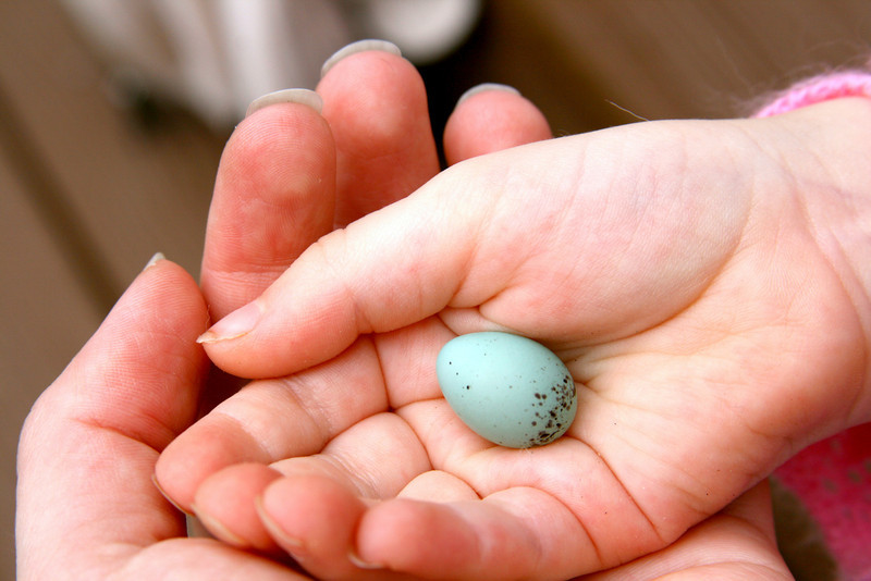 Rebecca and Pie holding a tiny robin egg. So small!