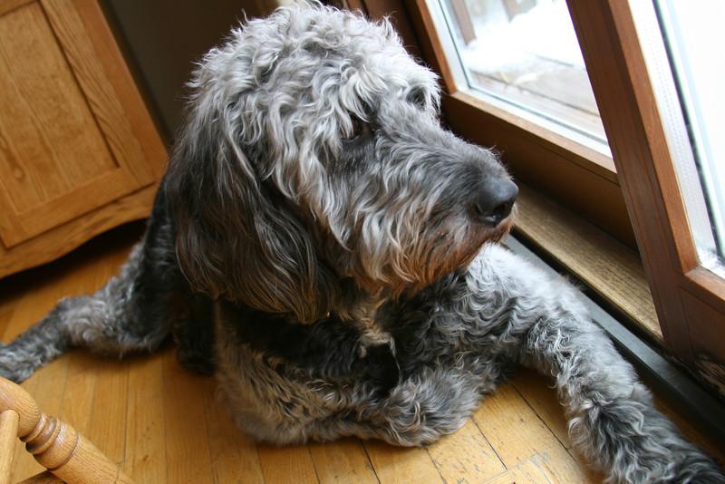 Captured dog portrait.