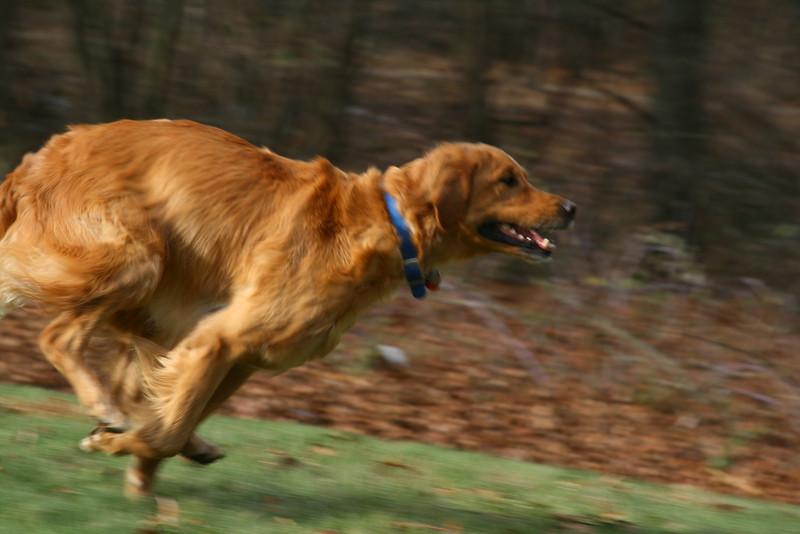 Captured dog portrait. Fisher in action!