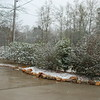 Snow_1Jan09_002