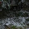 Snow_1Jan09_010