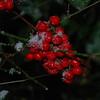 Snow_1Jan09_006