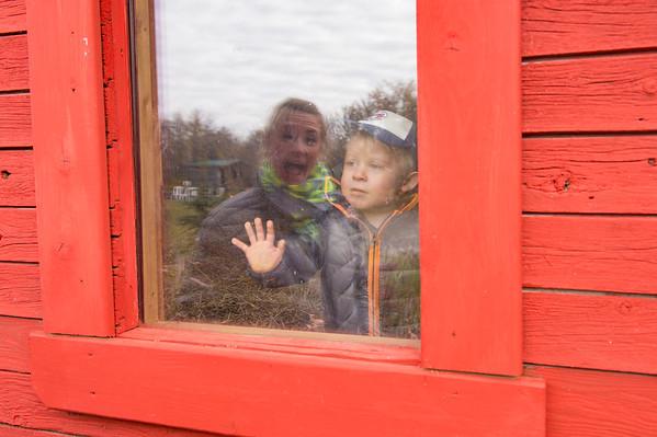 DSC_4793e Finn in Window