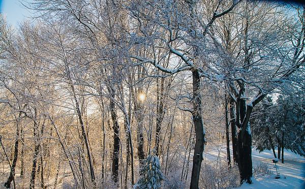 andrea snow