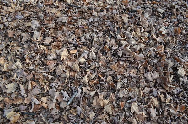 Little snake on the leaves.