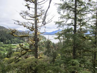 Ketchikan zip lining through the rain forest. http://www.alaskacanopy.com/