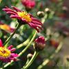 FLowers growing toward heaven..   back yard's in full bloom right now.  :)