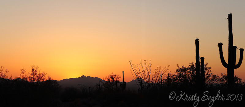 Gorgeous orange sky..  Hanging in Tuscon with my friend, and was disappointed at the lack of clouds in the sunset..  but then this amazing orange glow took over my heart... and I grabbed just a couple of these silouette shots..   so glad I decided to shoot it.
