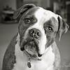 Molly Dog...