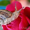 Tiny little snail