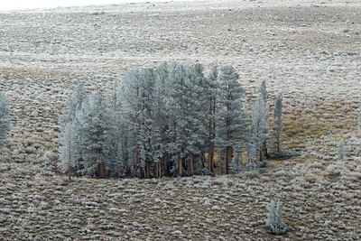 December - Morning Frost Virgina Creek Canyon Eastern Sierra