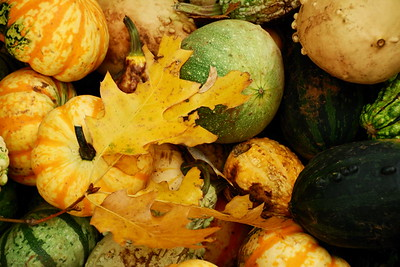 October - Box of Gourds Apple Hill - Placerville