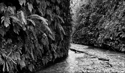 February Accent - Fern Canyon Redwood National Park