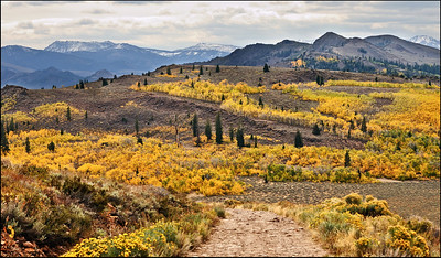 October Accent - Monitor Pass Humboldt Toiyabe National Forest