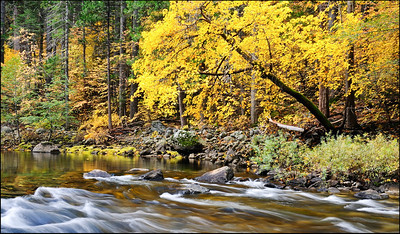 November Accent - Fall Colors on the Merced River Yosemite National Park