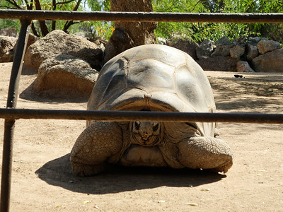Brandon's picture of the tortoise