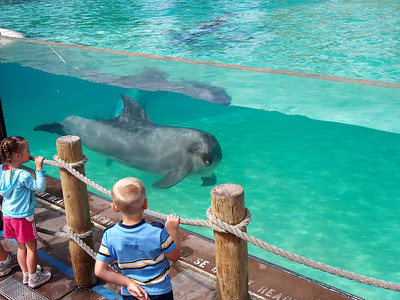 First time seeing dolphins