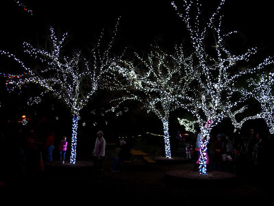 Grove of lights