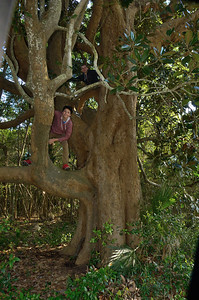 Couldn't resist the urge to climb this massive tree!