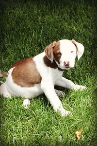 6-9-19 Puppies 11