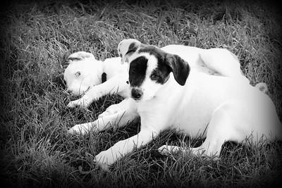 6-9-19 Puppies 19