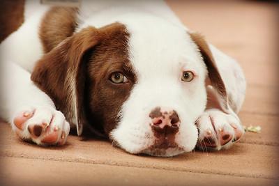 6-9-19 Puppies 4