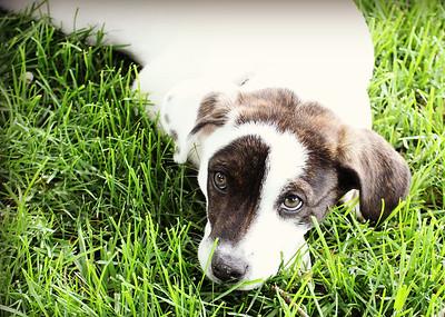 6-9-19 Puppies 20