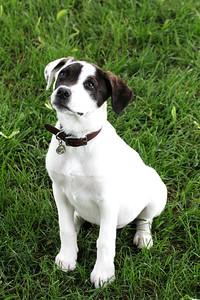 6-9-19 Puppies 13