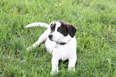 6-9-19 Puppies 25