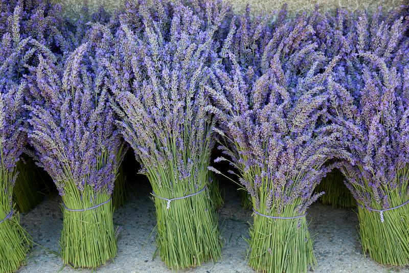 Lavender 4162