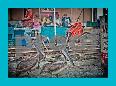 Jiving Pelicans I