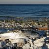 Min første havørred i 2011, Djursland i marts.