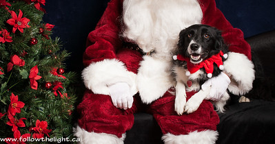 See Santa, I'm a good dog! Pet Value Photo with Santa