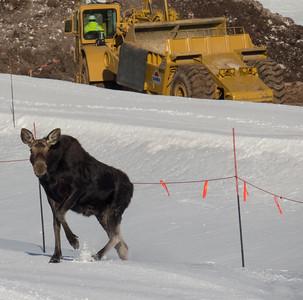 Moose Construction