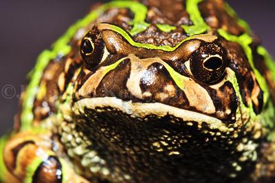 Hypno-Toad!