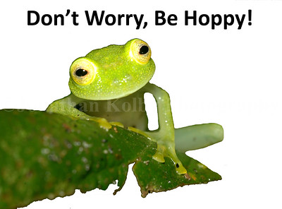 Don't Worry, Be Hoppy!
